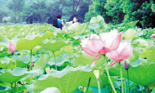 Hunan Worldwide Famous Flower Ecological Culture Festival will be held