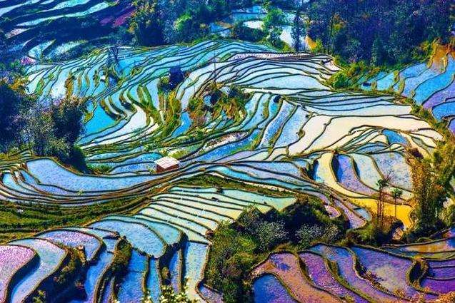 Ziquejie Terraced Fields Included in FAO Agricultural Cultural Heritage List